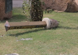 Cameron Park Restored with new Sewer Line