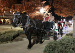 CU Hosts Tree Lighting